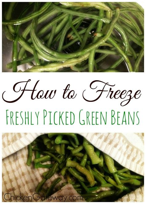 freezing green beans a how to guide