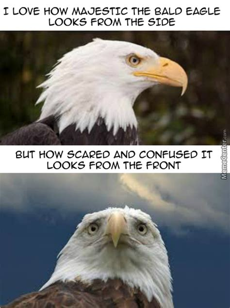America Eagle Meme - bald eagle memes best collection of funny bald eagle pictures