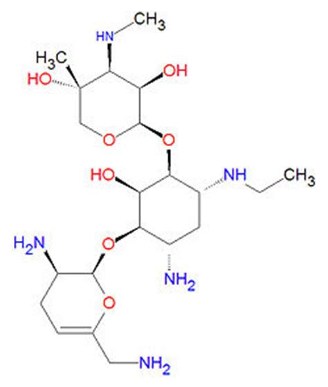 Aminoglycosides Also Search For Netilmicin Encyclopedia Article Citizendium