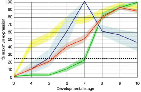 pattern formation during embryonic development is based on figure 4 computational and experimental analysis