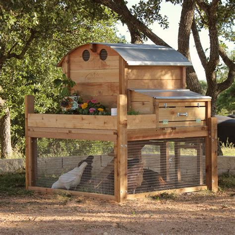 top backyard chicken coop by coop company