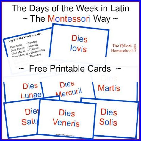 free printable montessori language cards 17 best images about montessori reading and writing on