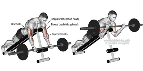 spider curls incline bench prone incline barbell curl aka barbell spider curl an