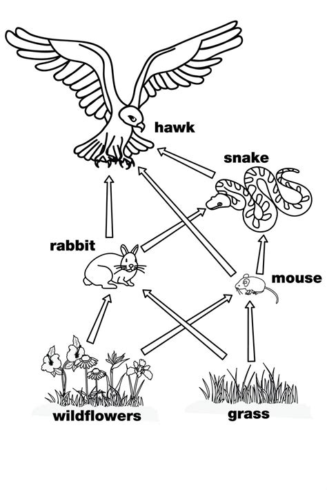 what is the purpose of a web diagram food web diagrams diagram site