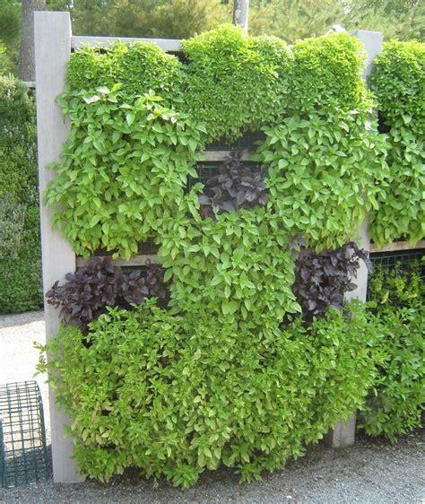 wall herb garden best 25 herb wall ideas on pinterest kitchen herbs