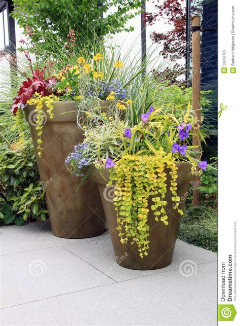 perennial container garden perennial flower containers stock photo image 56066755