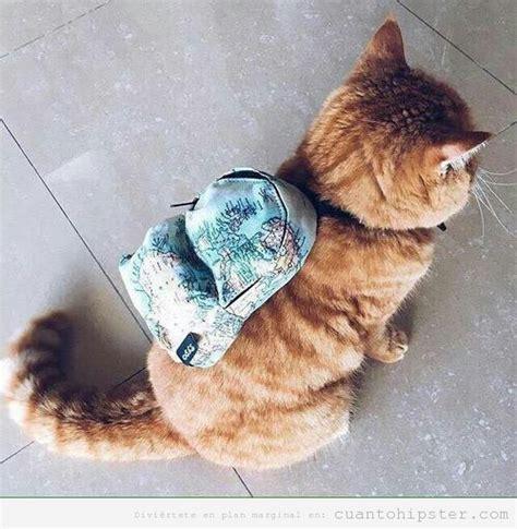 imagenes hipster gatos foto graciosa gato hipster cu 225 nto hipster