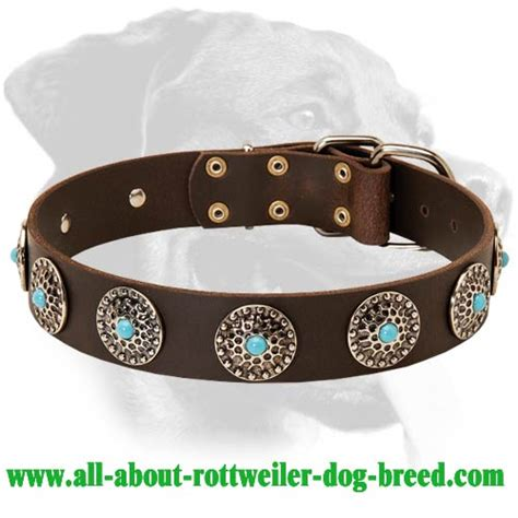 rottweiler leather collars purchase leather rottweiler collar walking