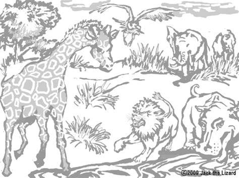 coloring sheets african animals free coloring pages of animals from africa