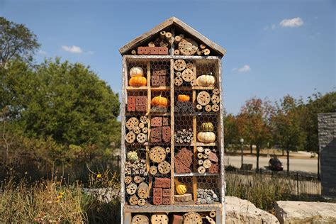 lincoln park schedule guests welcome at lincoln park zoo s new insect hotel