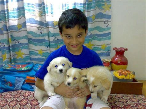 russian puppy for sale pets pakistan dogs russian puppies for sale in lahore