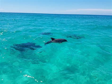 catamaran cruise destin florida destin summer 2017 dolphin cruises aboard our catamaran