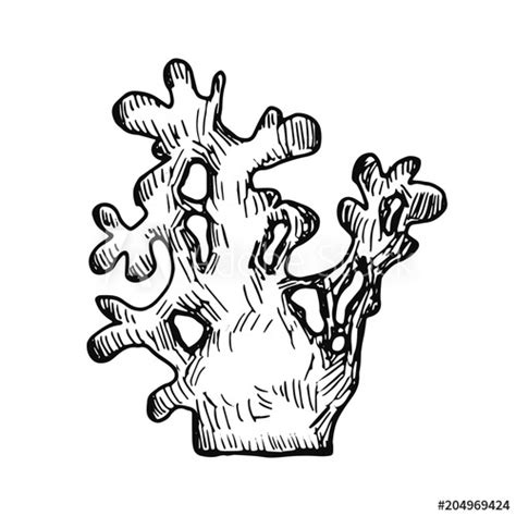 coral sketch isolated hand drawing buy  stock