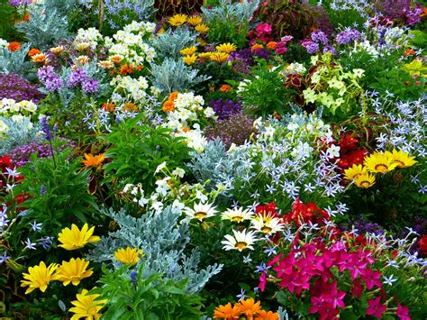 flowers garden free photo flower garden garden flowers free image on