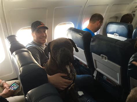service dogs on planes 18 delightful dogs on planes dogs lover