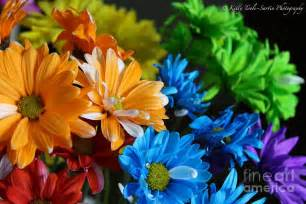 colored flowers rainbow colored flowers by toolesartin