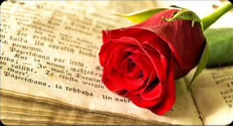 imagenes sant jordi whatsapp rosas libros y enamorados la fiesta de san jordi en