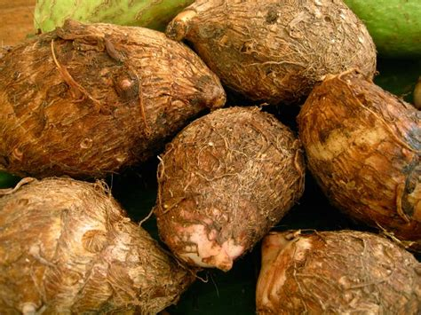 is yam a root vegetable fresh vegetables fresh teasel gourd exporters west bengal