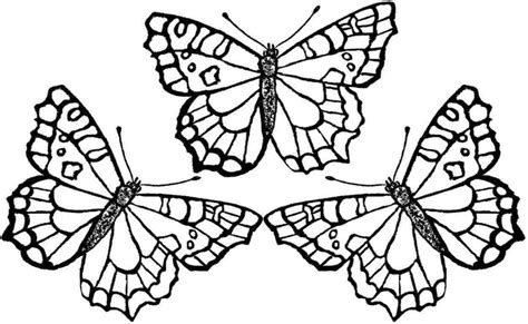 butterfly coloring page for kindergarten coloring pages butterfly coloring pages butterfly