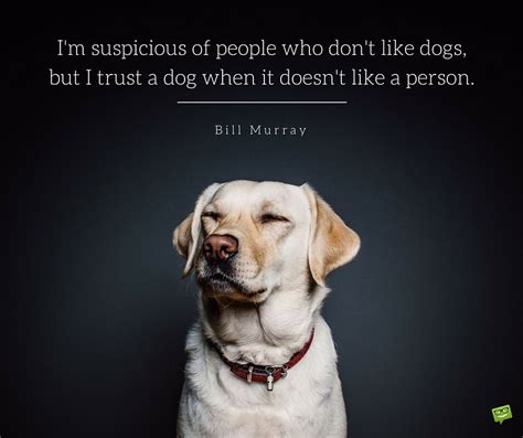 i dont like dogs 20 quotes for who dogs