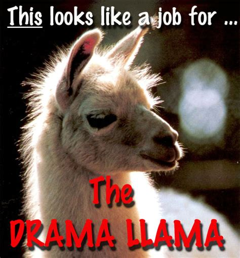 Llama Birthday Meme - whiskers in the window the drama llama has left the building