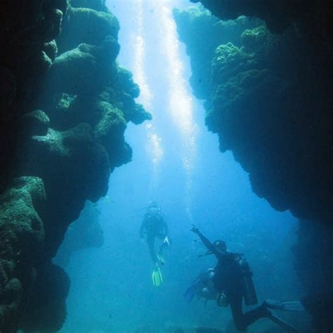 dive roatan diving roatan a mecca for divers