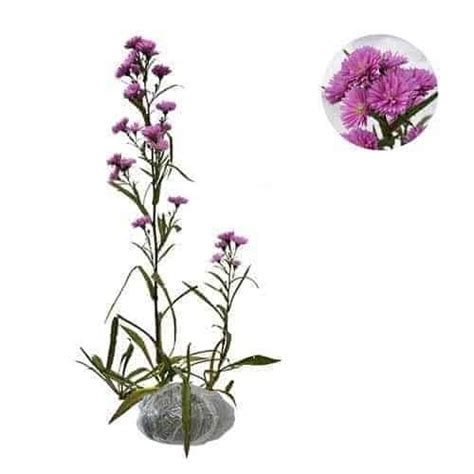 Bunga Hias Aster Mini jual tanaman aster pikok pink bibit