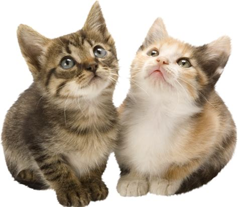 imagenes goticas de gatos chats page 12