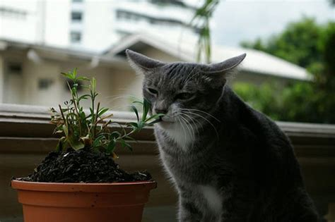 indoor plants how do you keep your cats away apartment