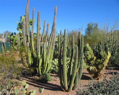 Arizona Desert Botanical Gardens Desert Botanical Garden Arizona Photos In February 2008