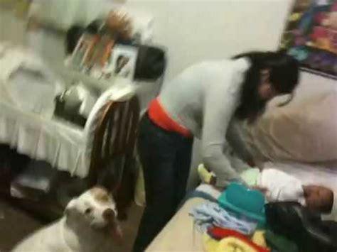 follada por su mascota videos de zoofilia hispana es violada por pitbull youtube
