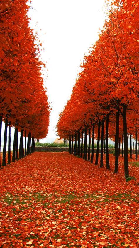 Cardinal Shoes Maximus 6 Coklat 66 wallpaper autumn note 3 image gt gt gt best wallpaper hd