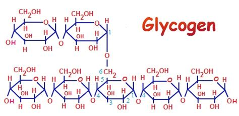 carbohydrates glycogen is glycogen a carbohydrate i bicycling
