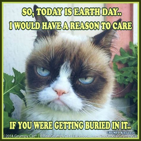 Cat Memes 2018 - 93 best my grumpy cats 2014 through 2018 images on pinterest funny animal funny animal pics