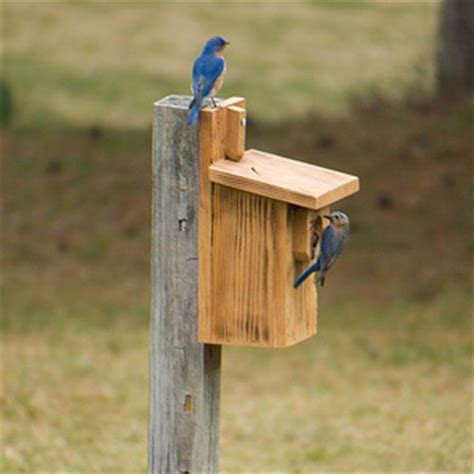 wildlife exemption blue bird box management plans