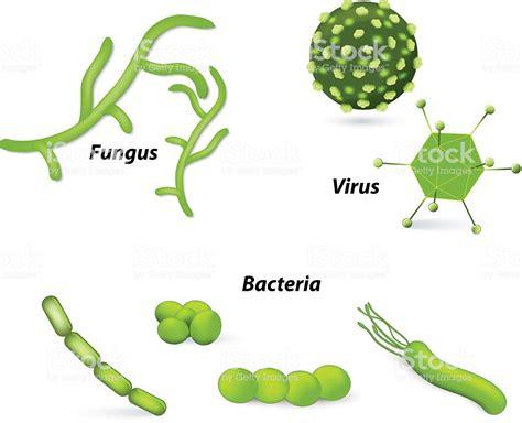 cadena alimenticia hongos y bacterias ilustraci 243 n de virus y bacterias y los hongos y m 225 s banco