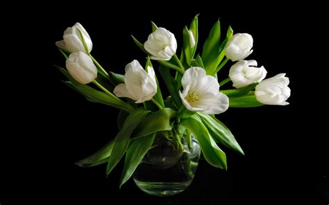 Black Vase With White Flowers by Vase White Tulip Flowers Black Background Wallpaper