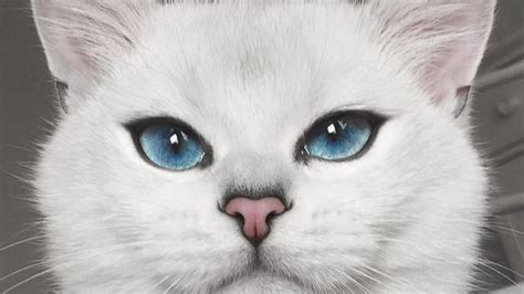 Bibit Eye Cat White majestic cat has the most blue tiful you ll see abc news
