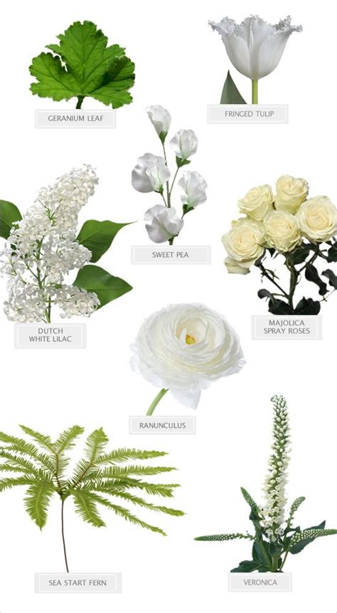 7 Types Of Flowers To For A Winter Wedding by 25 Best Ideas About Winter Flowers On