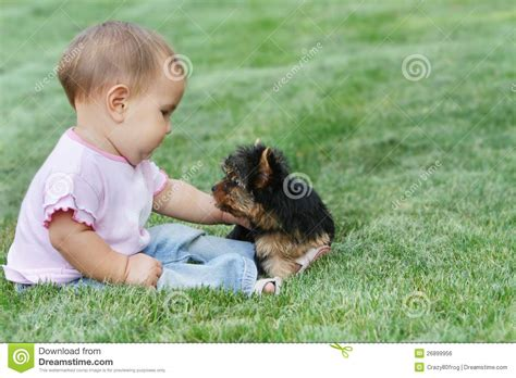 yorkie and baby baby child and terrier royalty free stock image image 26899956