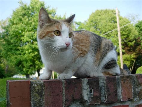 Cat On by File Stray Cat On Wall Jpg Wikimedia Commons
