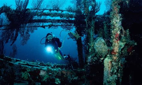 best dive spots in the caribbean 10 top dive in the caribbean st george s grenada
