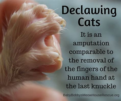 can you declaw a cat declawing house area phone island new york ny city data forum