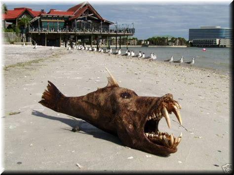 si鑒e du s駭at curtas de rodrigo curty pires peixe que morre na areia