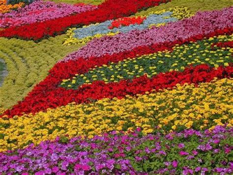 Indian Flower Garden Indian Flowers Best Flowers Flower Garden