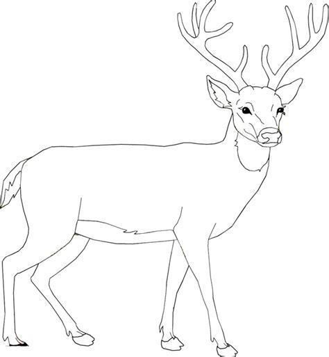 deer mouse coloring page deer mouse coloring book mice pages fish pictures kids