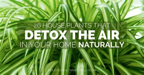 House For Plants | 26 house plants that detox the air in your home naturally