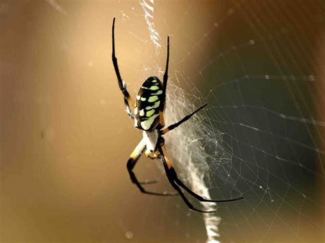 Garden Spider New Mexico Writing Spider New Mexico Style Flickr Photo