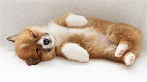 cute puppy pictures weneedfun