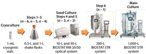 bioreactor cell culture protocol verification of new flexsafe str single use bioreactor